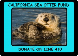 Sea Otter Tax Check Off_OPTION 3