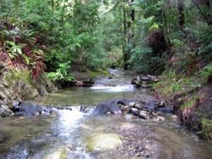 Upper San Lorenzo River