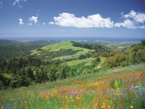 Mindego Hill-Russian Ridge Open Space Reserve