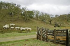 Blair Ranch