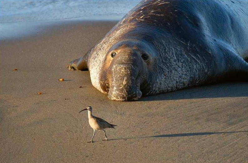 Elephant seal and large bird on the beach