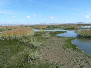 Napa Marsh