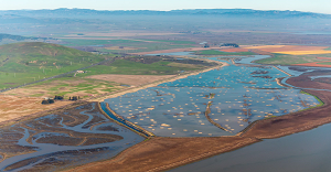 Wetlands photo