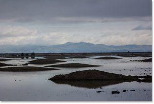 Marsh Mounds photo
