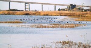 Wetlands and bridge