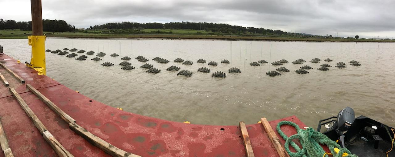 Reef Element on mudflats