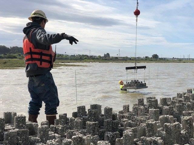 workers installing reef elements nearshore at Giant Marsh